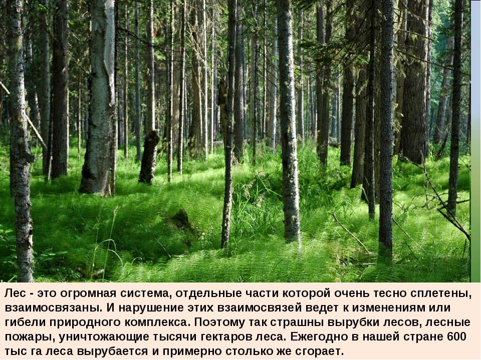 Лес - это огромная система, отдельные части которой очень тесно сплетены, вза...