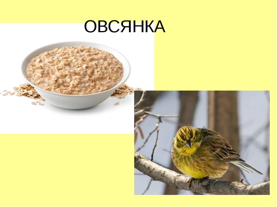 ОВСЯНКА
