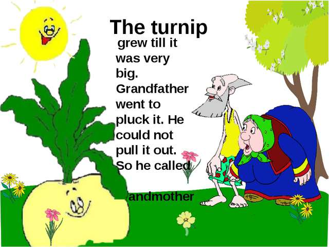 The turnip grew till it was very big. Grandfather went to pluck it. He could...