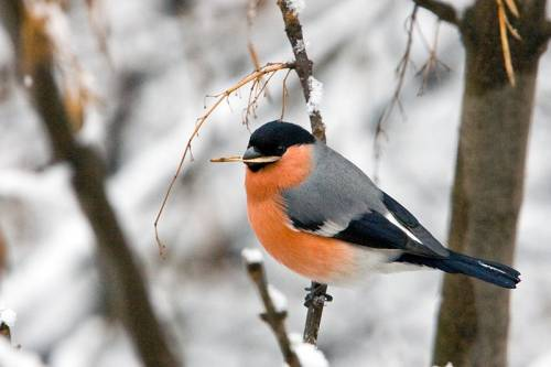 Самые зимние птицы