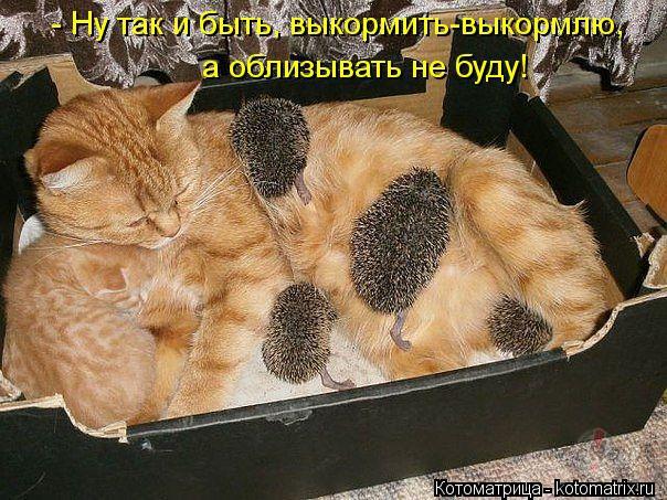 http://ig.att.oho.lv/4346/79494.jpg