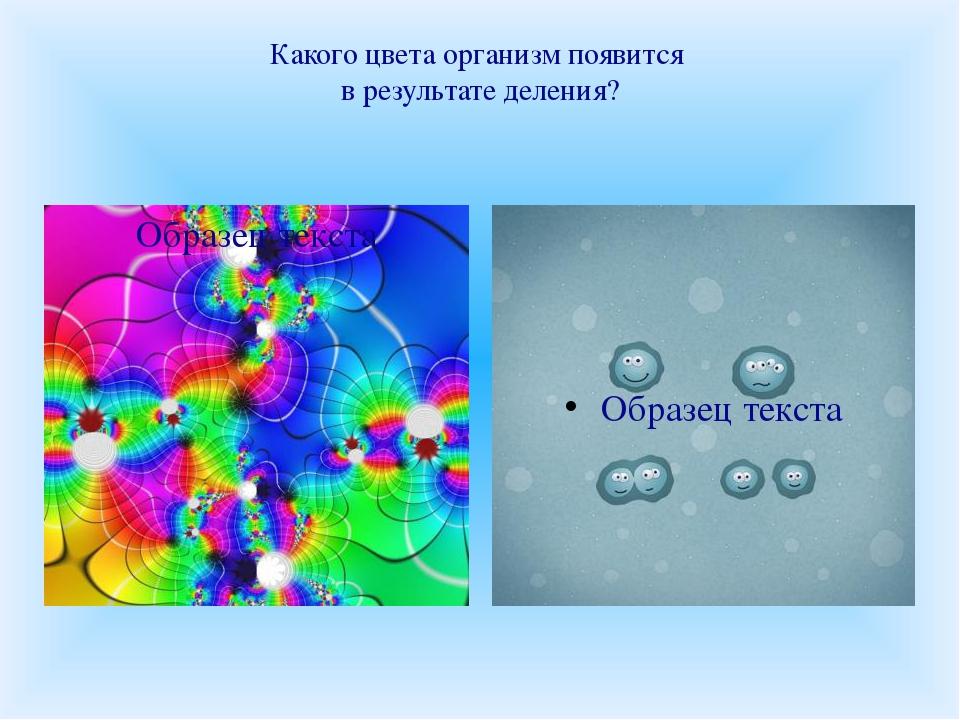 Какого цвета организм появится в результате деления?