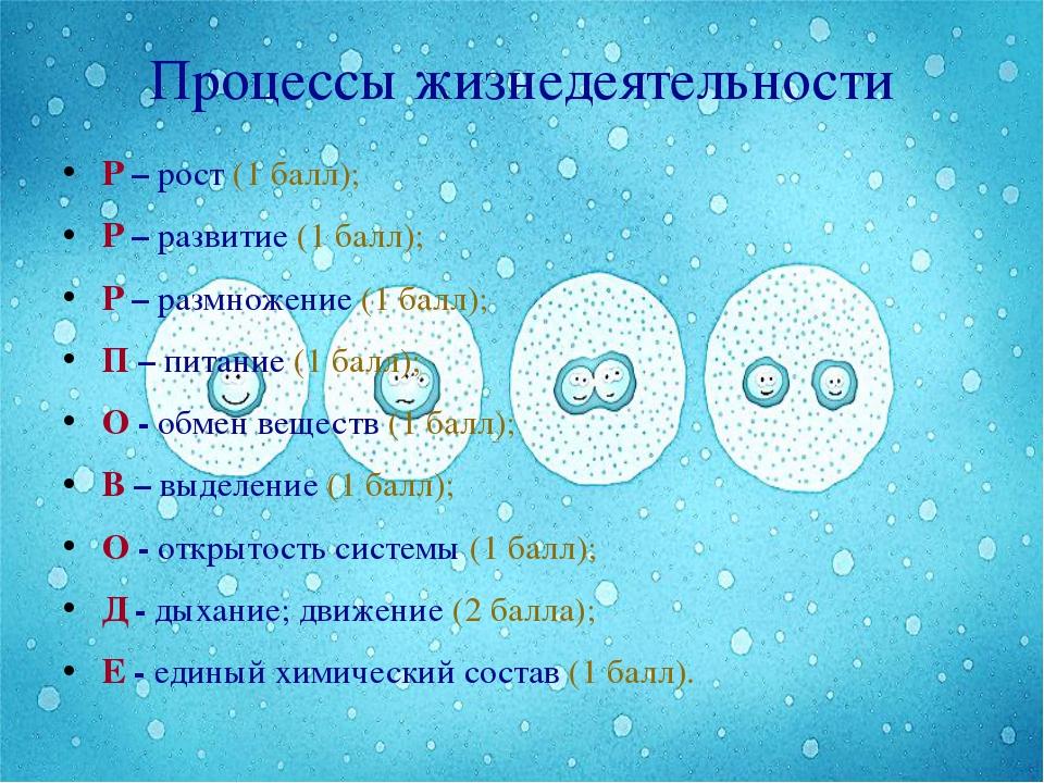 Процессы жизнедеятельности Р – рост (1 балл); Р – развитие (1 балл); Р – разм...