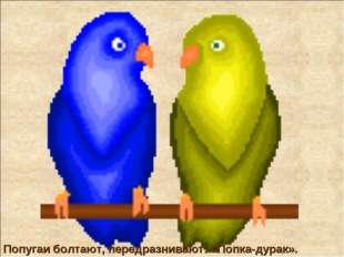 Попугаи болтают, передразнивают: «Попка-дурак».
