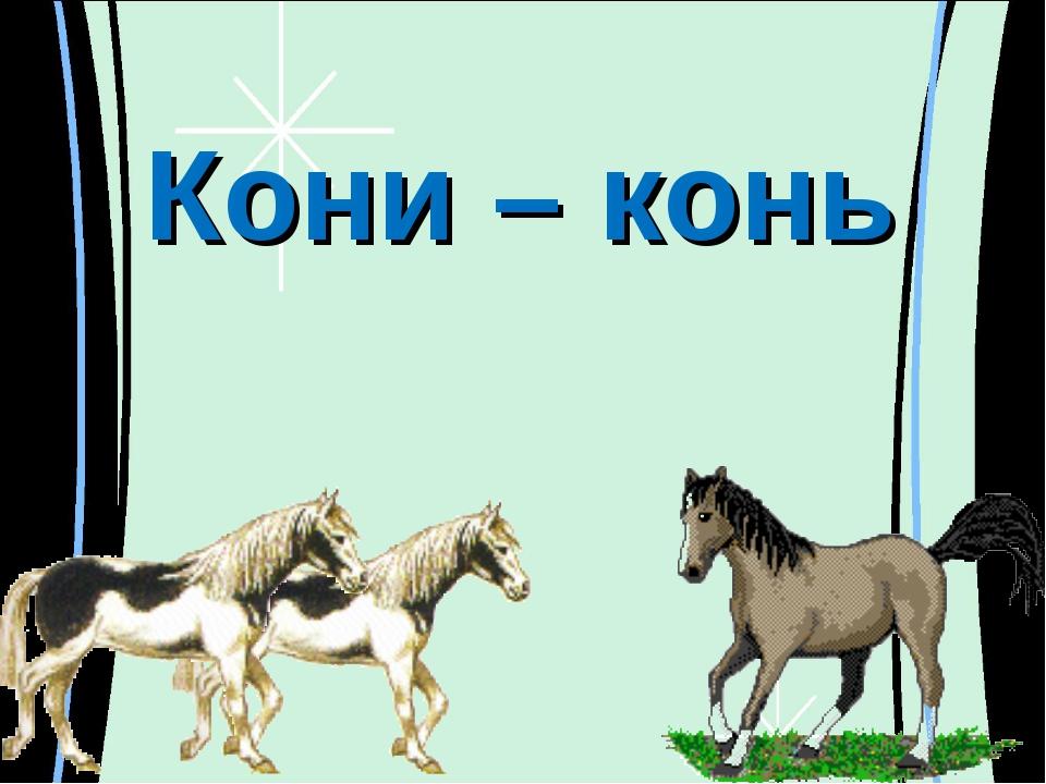 Кони – конь