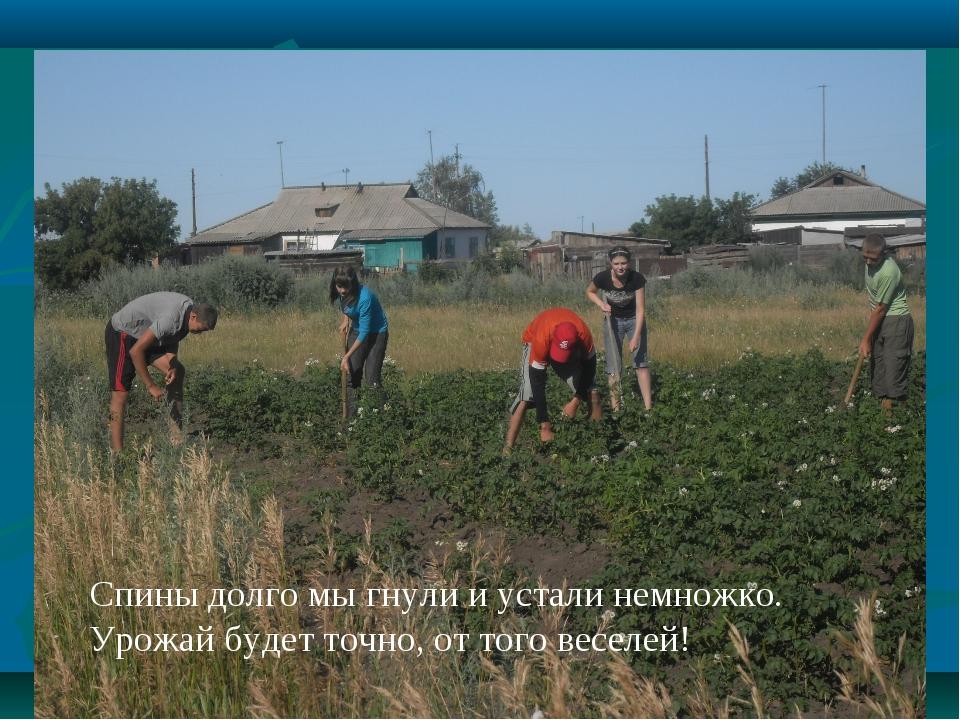 Спины долго мы гнули и устали немножко. Урожай будет точно, от того веселей!
