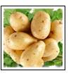 картофель - среднеранний сорт Лина