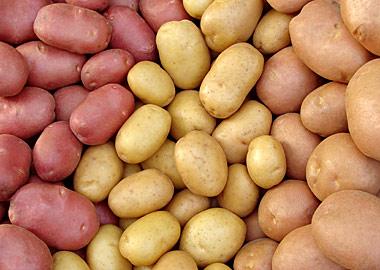 Интересный факт: картофель является самой важной не-зерновой культурой в мире