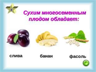 Сухим многосеменным плодом обладает: 4 слива фасоль банан