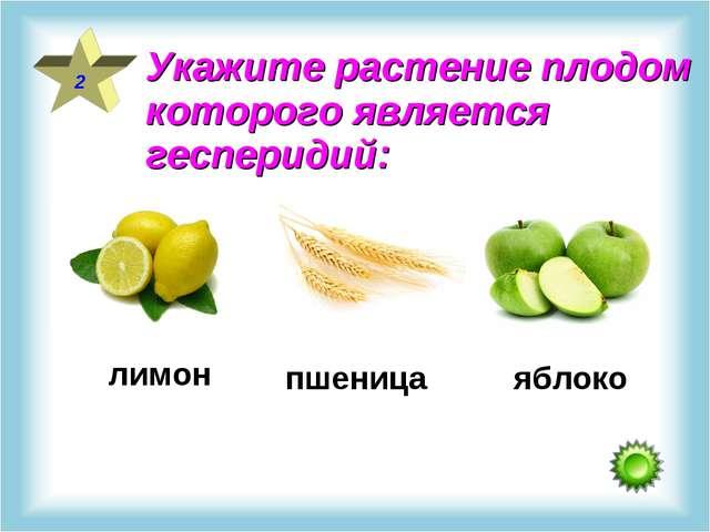 2 Укажите растение плодом которого является гесперидий: лимон пшеница яблоко