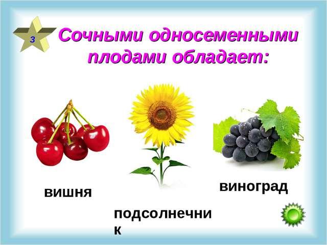 Сочными односеменными плодами обладает: 3 вишня подсолнечник виноград