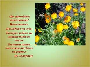 «Вы проходите мимо цветка? Наклонитесь, Поглядите на чудо, Которое видеть вы