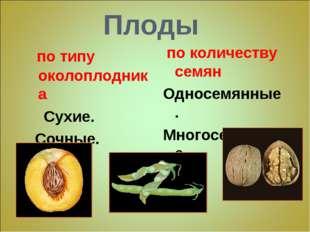 Плоды по типу околоплодника Сухие. Сочные. по количеству семян Односемянные.