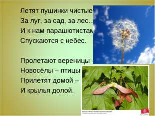 Летят пушинки чистые За луг, за сад, за лес… И к нам парашютистами Спускаются