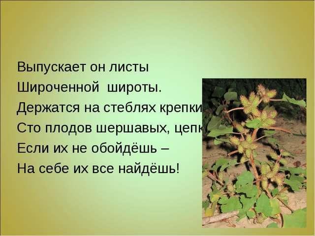 Выпускает он листы Широченной широты. Держатся на стеблях крепких Сто плодов...