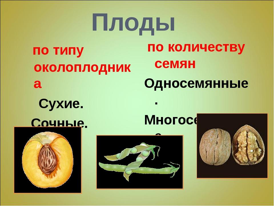 Плоды по типу околоплодника Сухие. Сочные. по количеству семян Односемянные....
