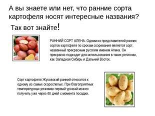 А вы знаете или нет, что ранние сорта картофеля носят интересные названия? Та