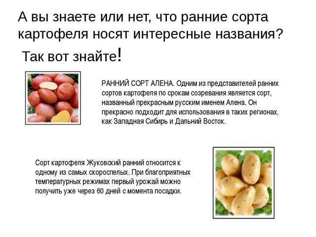 А вы знаете или нет, что ранние сорта картофеля носят интересные названия? Та...