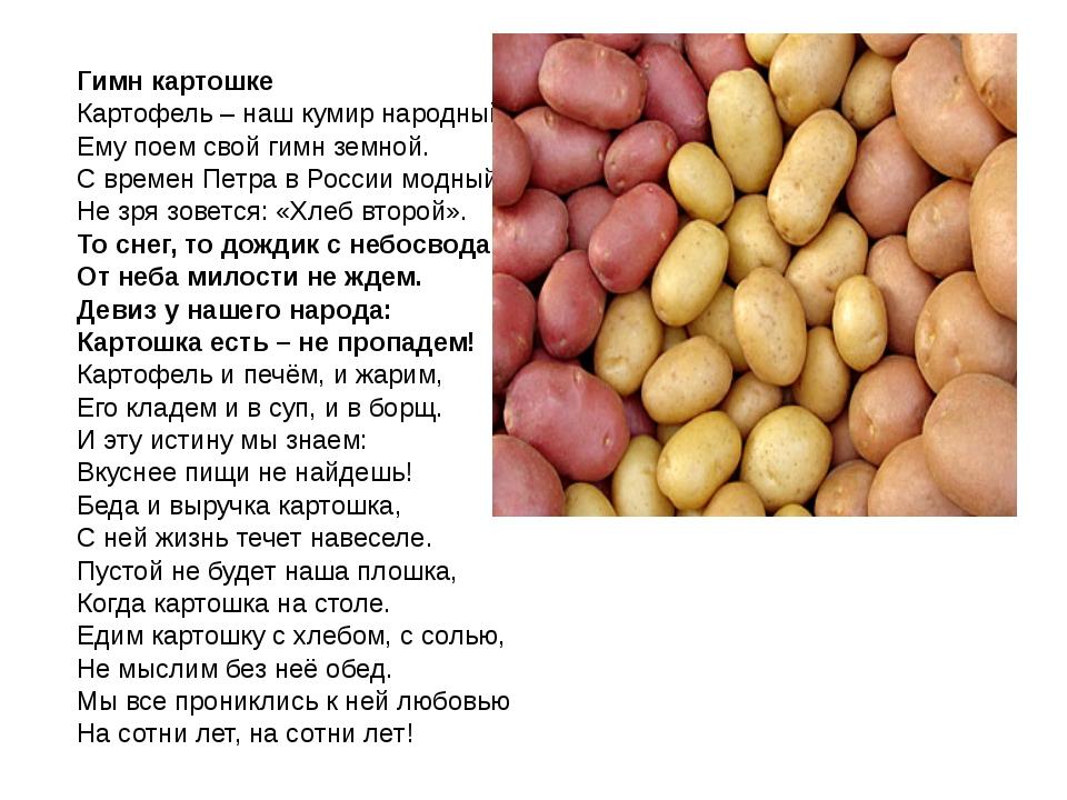 Гимн картошке Картофель – наш кумир народный! Ему поем свой гимн земной. С в...