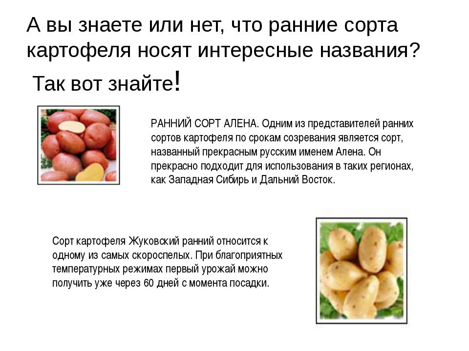 Гала картофель описание отзывы посадка и уход