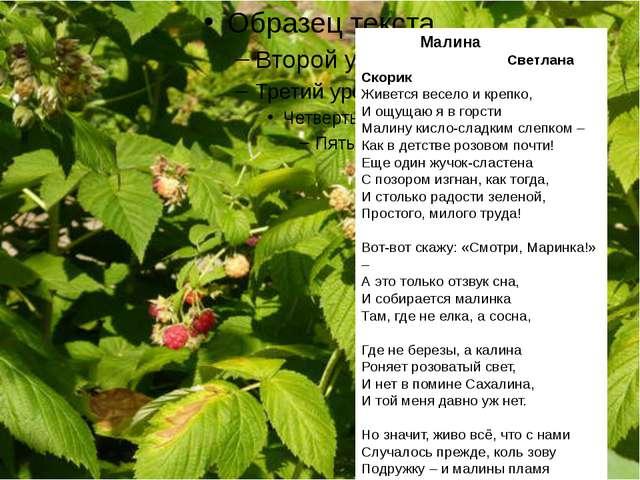 Малина Светлана Скорик Живется весело и крепко, И ощущаю я в горсти Малину к...