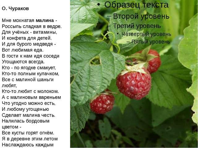 О. Чураков Мне мохнатая малина - Россыпь сладкая в ведре. Для учёных - витам...