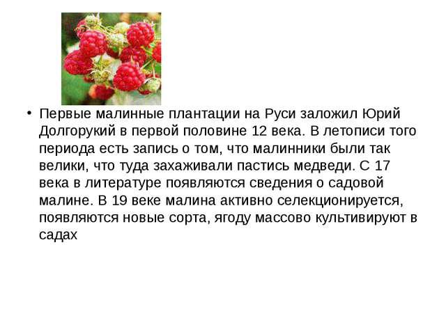 Первые малинные плантации на Руси заложил Юрий Долгорукий в первой половине...
