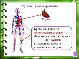 Интернет - ресурсы http://www.ural.ru/gallery/news/people/body/anatomy.jpg че