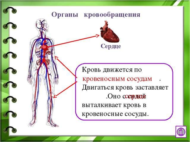 Интернет - ресурсы http://www.ural.ru/gallery/news/people/body/anatomy.jpg че...