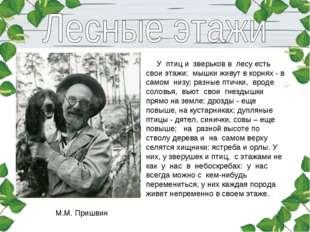 М.М. Пришвин У птиц и зверьков в лесу есть свои этажи: мышки живут в корн