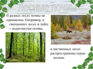 В разных лесах почвы не одинаковы. Например, в смешанных лесах и тайге – подз