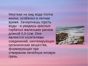 Мертвая на вид вода полна жизни, особенно в летнее время. Зачерпнешь горсть