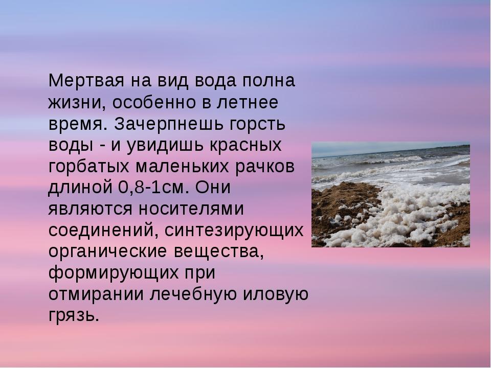 Мертвая на вид вода полна жизни, особенно в летнее время. Зачерпнешь горсть...
