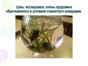 Цель: исследовать жизнь прудовика обыкновенного в условиях комнатного аквариу