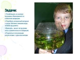 Задачи: 1.Понаблюдать за жизнью прудовика обыкновенного в комнатном аквариуме