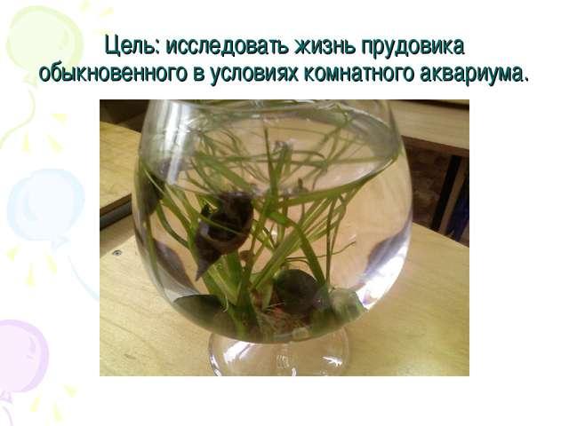 Цель: исследовать жизнь прудовика обыкновенного в условиях комнатного аквариу...