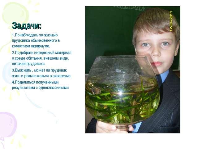 Задачи: 1.Понаблюдать за жизнью прудовика обыкновенного в комнатном аквариуме...