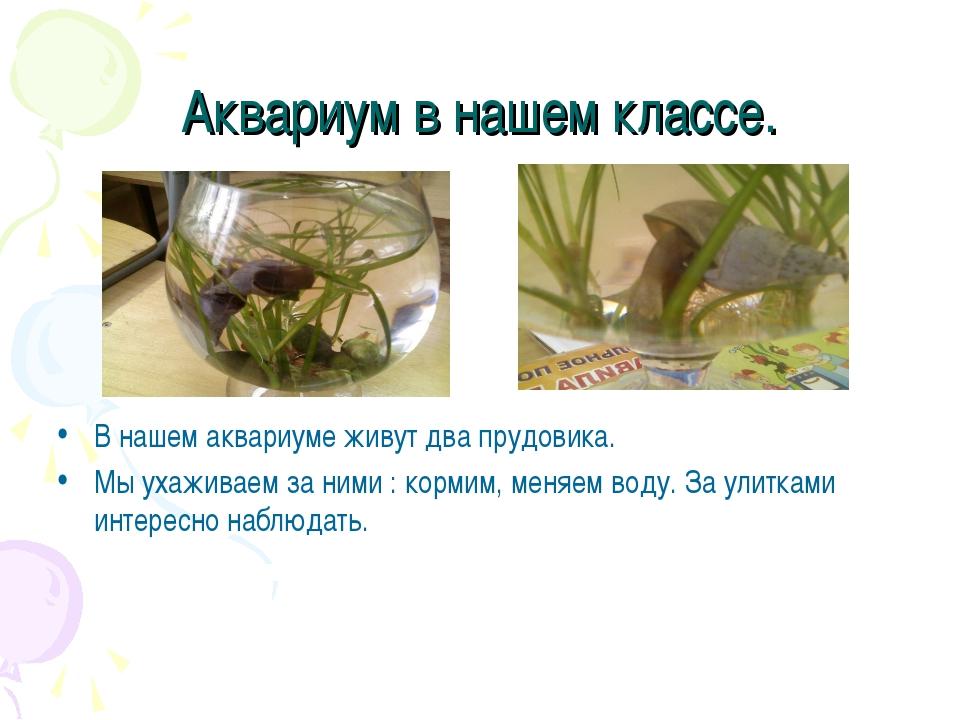 Аквариум в нашем классе. В нашем аквариуме живут два прудовика. Мы ухаживаем...