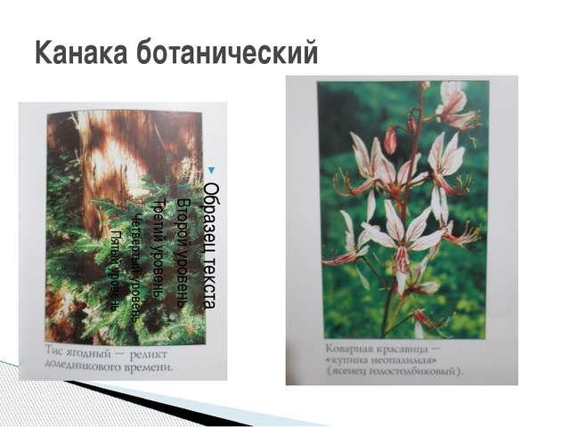 Канака ботанический