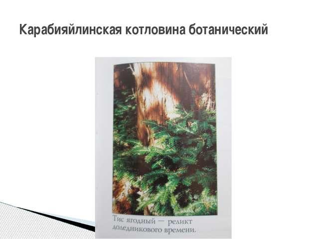 Карабияйлинская котловина ботанический