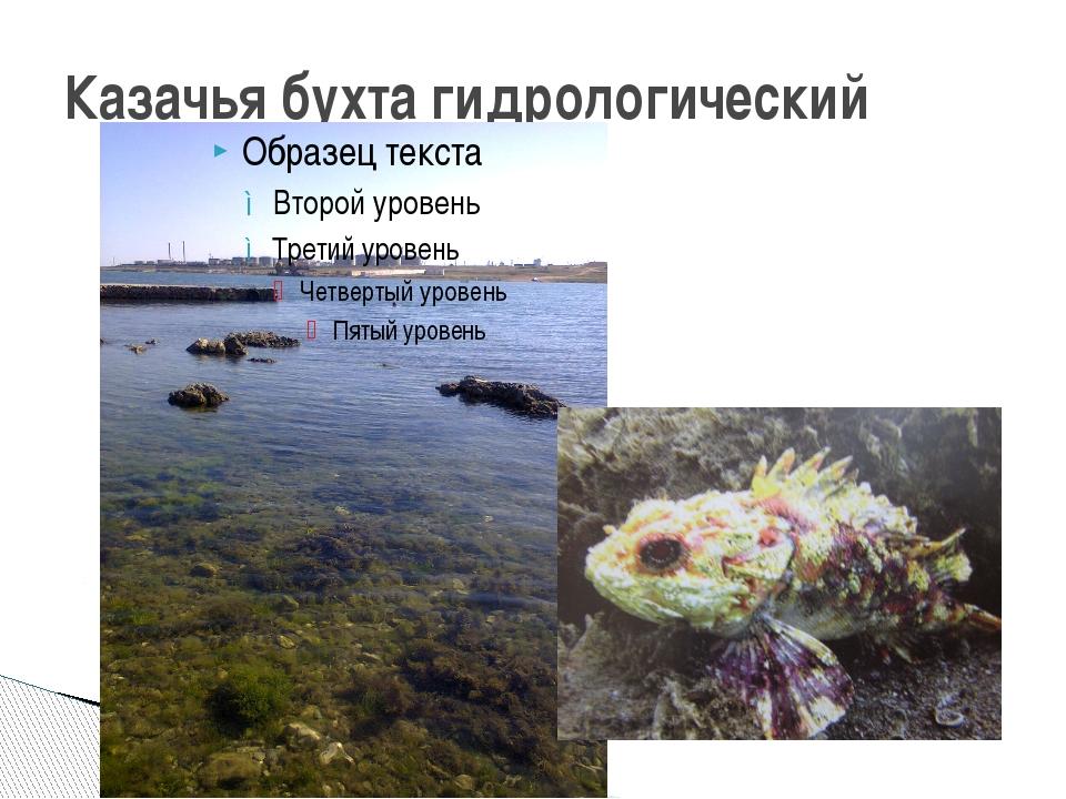 Казачья бухта гидрологический