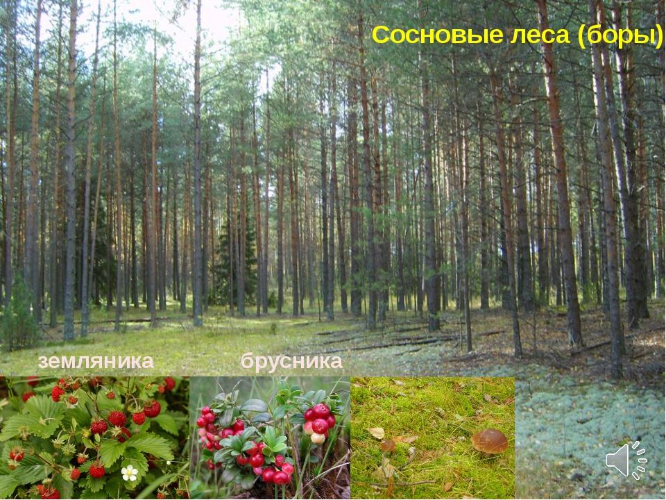 здравствуйте, рада растительность нижегородской области фото одного внятного рецепта