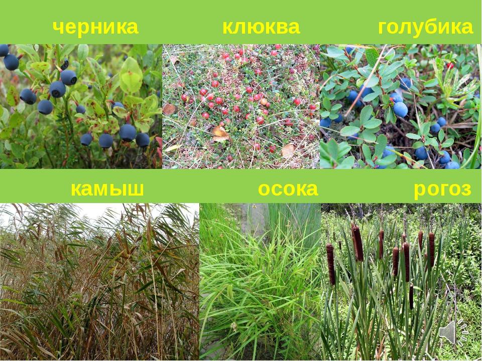 растительность нижегородской области фото яркости