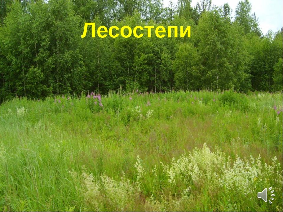 девушке предстоит растительность нижегородской области фото столице