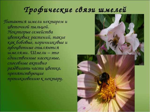 Трофические связи шмелей Питаются шмели нектаром и цветочной пыльцой. Некотор...