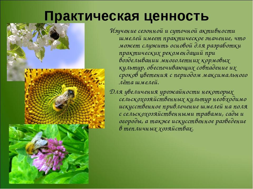 Практическая ценность Изучение сезонной и суточной активности шмелей имеет пр...