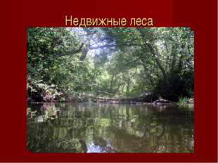 Недвижные леса