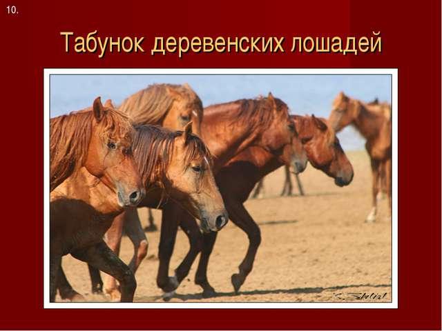 Табунок деревенских лошадей 10.