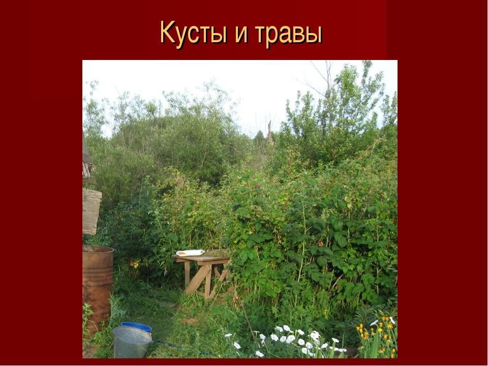 Кусты и травы