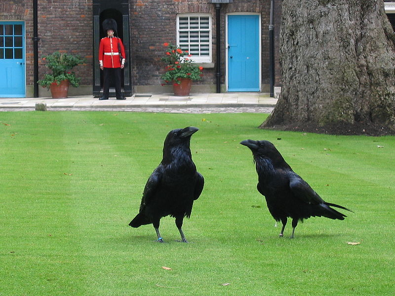 C:\Users\пользователь\Desktop\800px-London_tower_ravens.jpg